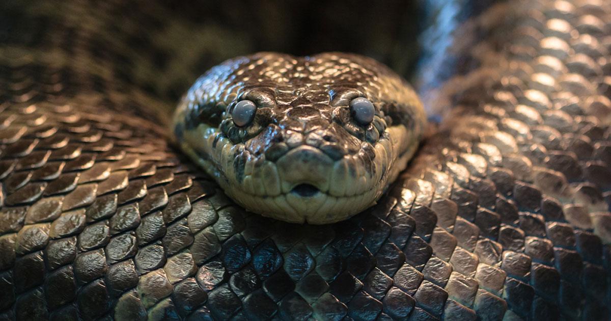 la phobie des serpents une peur qu 39 un hypnoth rapeute peut traiter. Black Bedroom Furniture Sets. Home Design Ideas