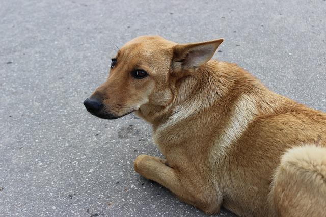 L'hypnose contre la phobie des chiens et des chats