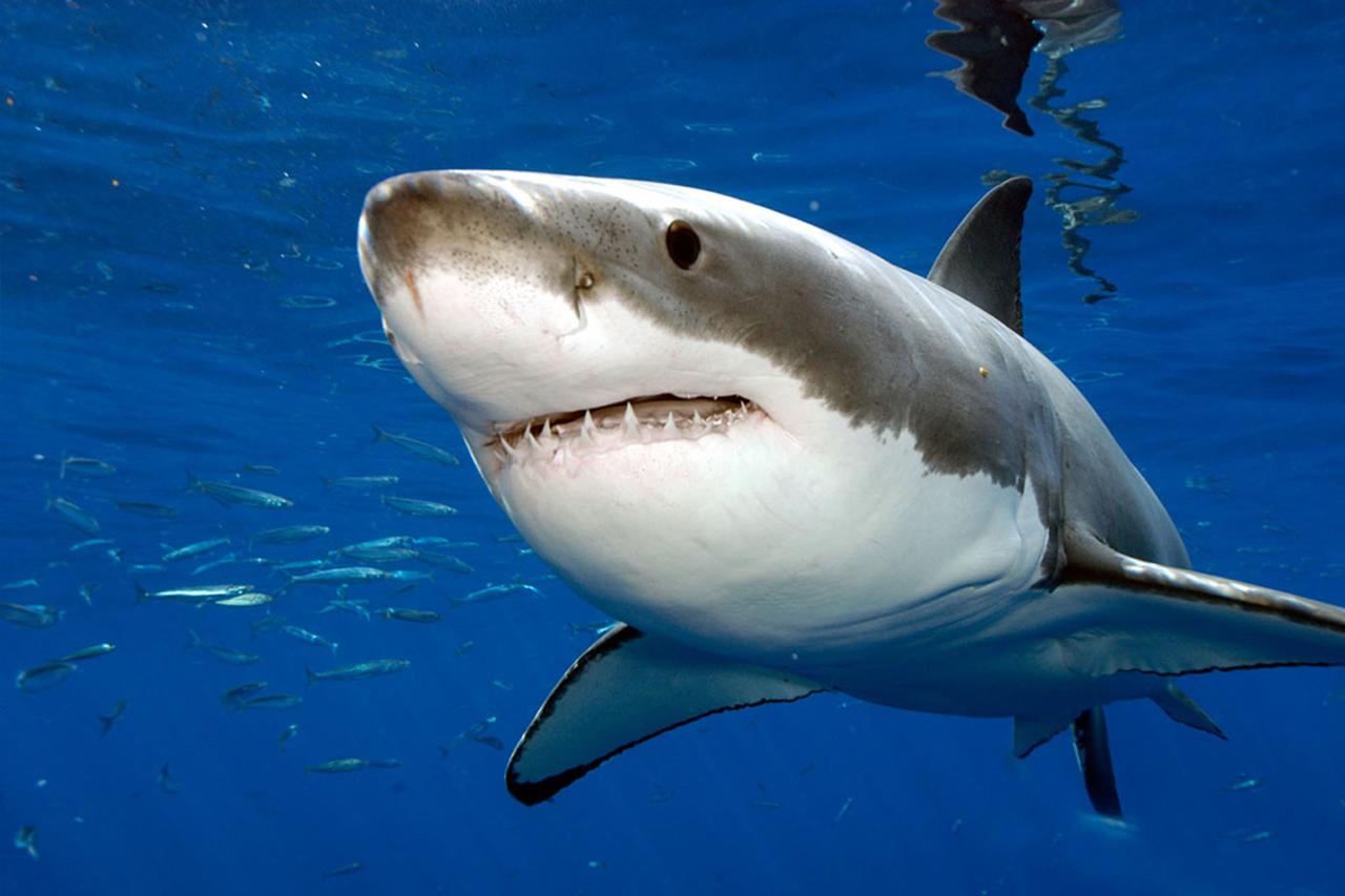 L'hypnose peut vous aider à combattre votre peur des requins