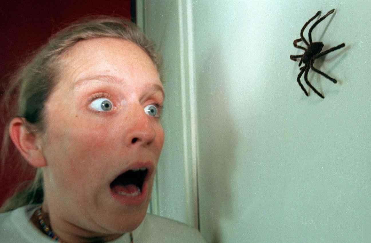 comment vaincre sa peur des araign es arachnophobie hypnose phobie. Black Bedroom Furniture Sets. Home Design Ideas