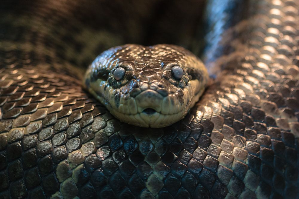 phobie des serpents hypnose