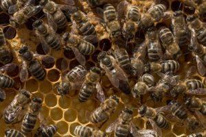 apiphobie ou peur des abeilles, bourdons, guêpes